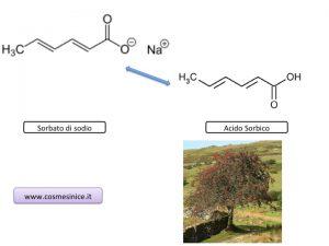 molecola dei conservanti